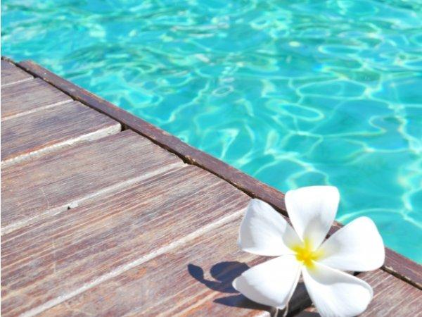ハワイの花 プルメリア