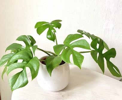 オープンハウスの準備 観葉植物